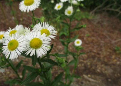 Maherah - Tranquil Flora
