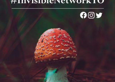 Toronto Mycelial Network