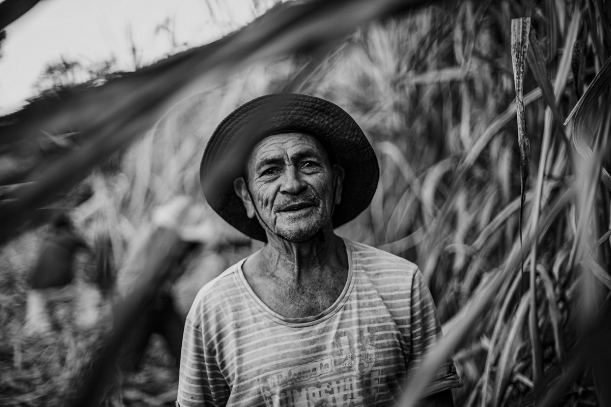 His eyes twinkle, brightening his weathered, work-worn face in this portrait. He pauses, looking at us and also beyond us, his beatific gaze shielded and encircled by the halo of a hat brim. Behind him, the other workers continue to wrestle the towering wall of dry, leafy stalks, emphasizing his momentary stillness with the blur of their industry.